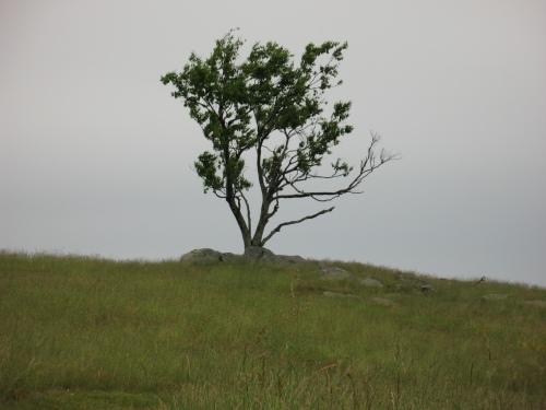 Doughton Park Tree #3