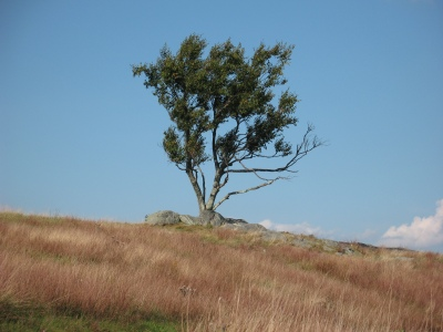 Doughton Park Tree #2