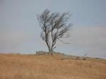 Doughton Park Tree#13
