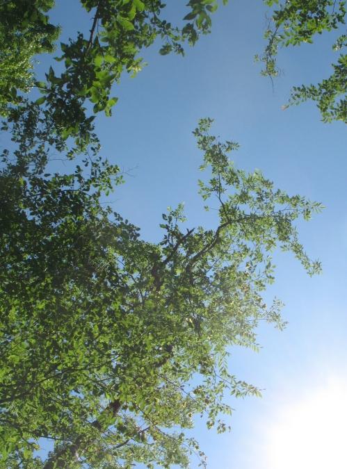 look-up.jpg