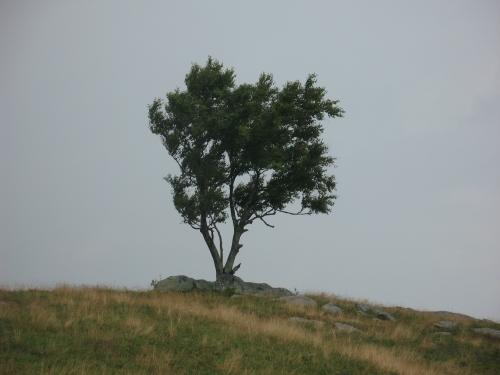 2014-07-13 Doughton Park Tree