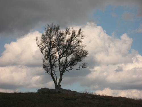 2016-10-17a Doughton Park Tree