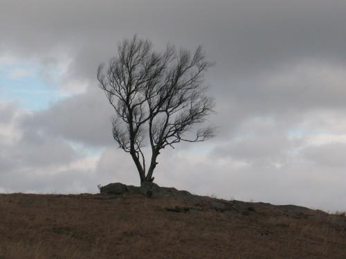 2017-03-06a Doughton Park Tree