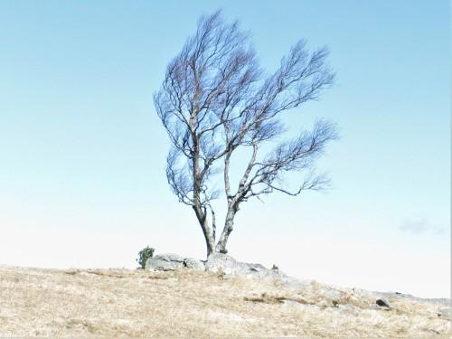 2020-03-07 Doughton Park Tree