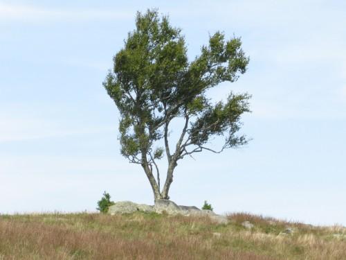 2020-09-08b Doughton Park Tree