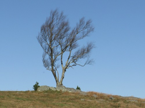 2020-11-03b Doughton Park Tree