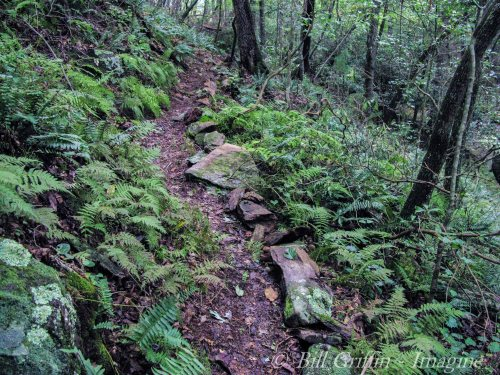 Forest Bathing Trail, Grassy Creek off Mountains-to-Sea Trail